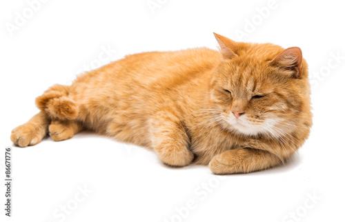 Cat stock earnings