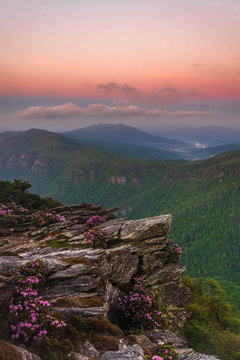 The Rhododendron spring blooms on top of Hawksbill Mountain at the Linville Gorge Wilderness Area.