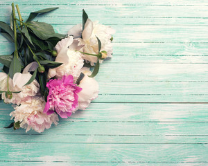 Splendid  white and pink  peonies flowers