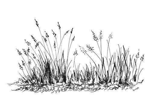 Hand sketch grass