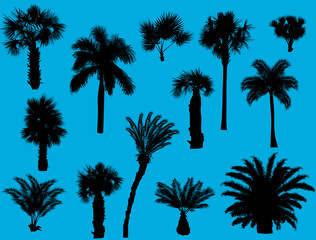 thirteen palm silhouettes isolated on blue