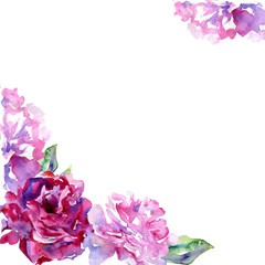 White background with violet, pink peons and copy space