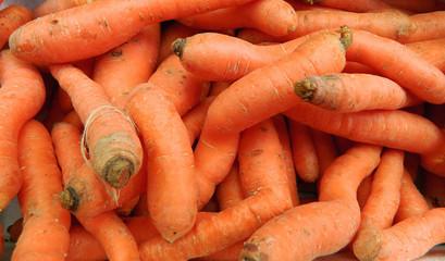 Carrots in market