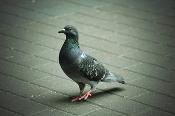 pigeons city space