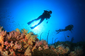 Scuba diving on coral reef underwater Wall mural