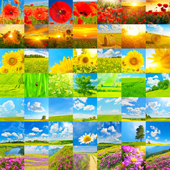 Collection of summer landscapes and flowers