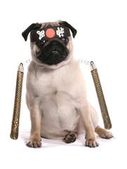 Ninja karate pug