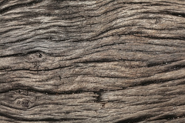old wood texture of dried