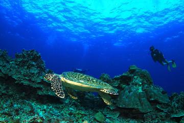 Scuba divers and Hawksbill Sea Turtle