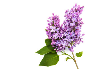 Photo sur Aluminium Lilac Lilac flowers