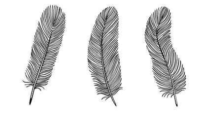 Set of Black and White Feather.