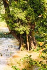 Nature of Ethiopia Africa