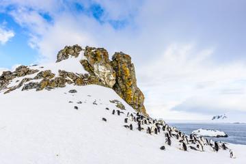 Canvas Prints Antarctic Half Moon Island, South Shetland, South Pole