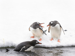Penguins play on the ice rock