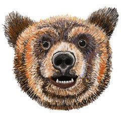 Bear with smile expression,  Grizzly, Kodiak Bear Isolated Vector