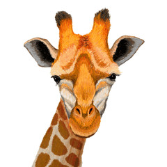Hand drawn illustration of cute giraffe face on white background