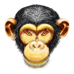 Monkey chimpanzee head, ape, simia troglodytes, front face