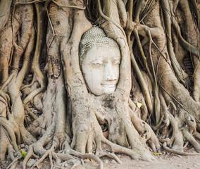 Buddha head in Wat Mahathat