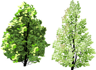 two isolated green trees illustration