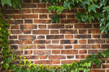 レンガの壁の背景 Brick wall  background
