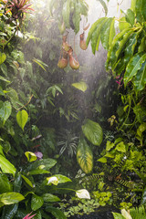 Fototapete - tropical rain forest