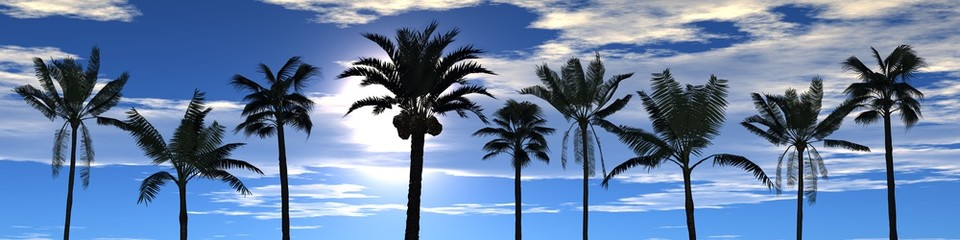 view of palm trees on the sky