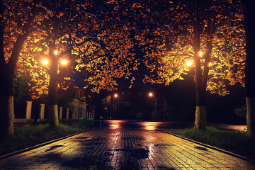 Autumn night landscape in the park alley trees