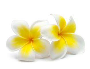 Foto op Textielframe Frangipani flower frangipani