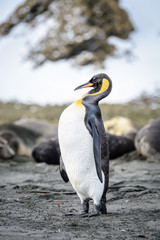 Portrait of a penguin on the South Pole