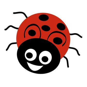 pszczoła,biedronka,owady