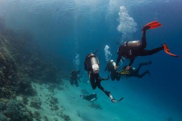 Diver on the reaf