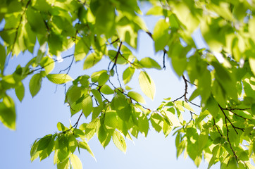 Green tree and sunny day. Great spring wallpapers