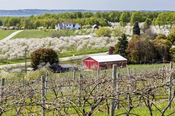 Beautiful cherry blossom landscape in Traverse City Michigan