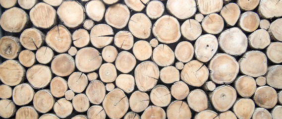 wallpaper wood log Wall mural