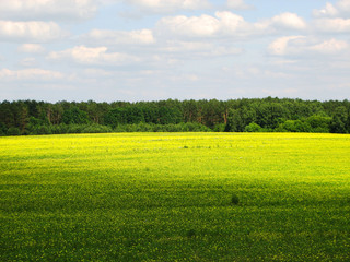 Summer landscape with field of grass