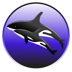 Vector killer whale swim in the ocean with a baby