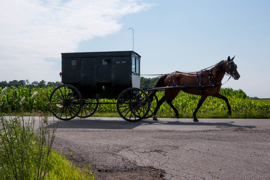 Amish Horse and Buggy. An Amish style black buggy drawn by horse in rural Indiana, United States.