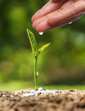 hand nurturing and watering a young plant / Love and protect nature concept