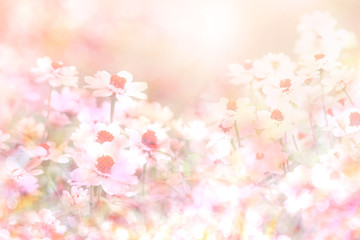 soft sweet pink flower background from daisy flowers