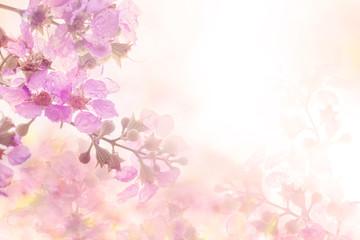 soft sweet pink flower background from Plumeria frangipani flowers