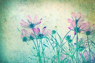 retro of Cosmos flower background