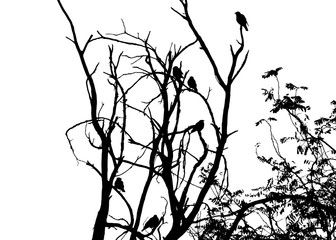 Birds on tree