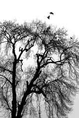 Black and white image of birds flying off a tree.