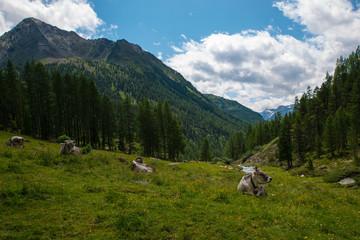 Finstertal / Oetztal Alps in Tyrol, Austria