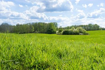 Wiese in der Uckermark