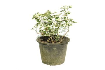 A potted plant isolated on white background