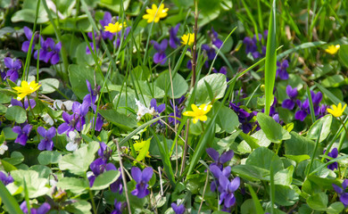 Green grass field with wild colored flowers