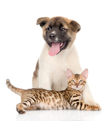 Japanese Akita inu puppy dog and bengal kitten together. solated