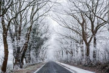 Allee im Winter