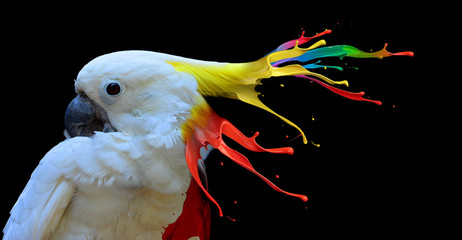Poster Perroquets Digital photo manipulation of a white parrot